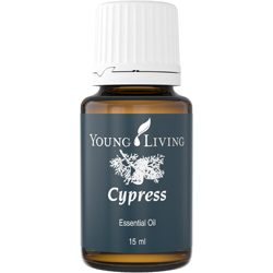 Cypress essential oil - Aroma of Wellness