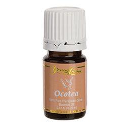 Ocotea essential oil - Aroma of Wellness